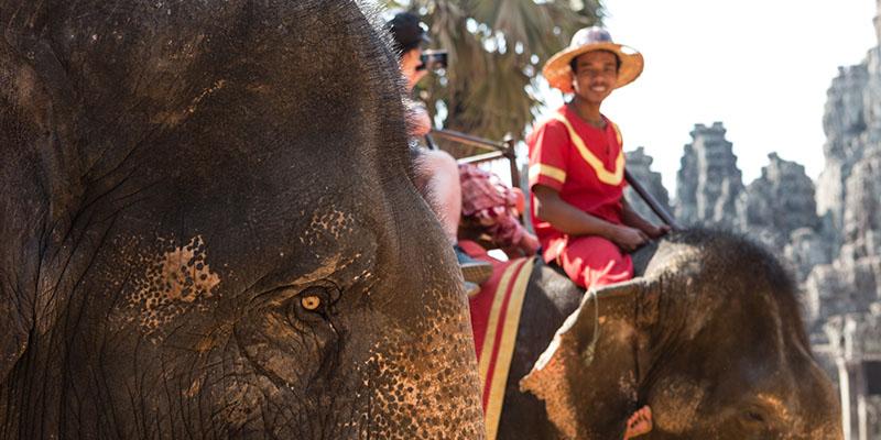 Elephant_Ride at Bayon